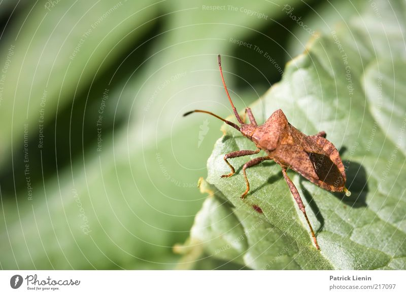 descent Environment Nature Plant Animal Elements Spring Leaf Foliage plant Bug Insect Feeler Small Green Colour photo Exterior shot Detail