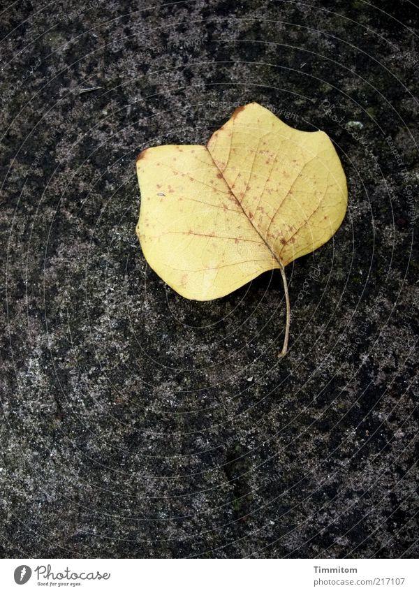 Nature Beautiful Leaf Autumn Environment Esthetic Clean Natural Botany Individual Rachis Autumn leaves Limp Autumnal colours