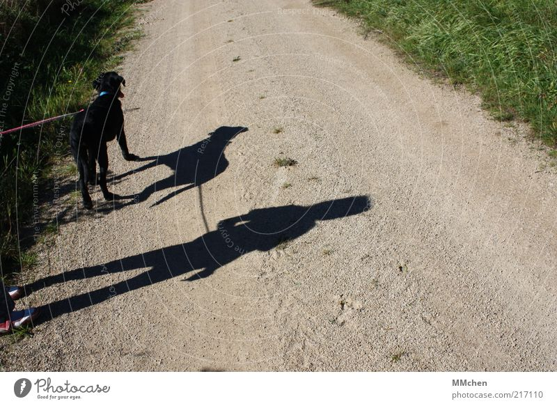 Human being Child Summer Animal Dog Lanes & trails Wait Footpath Beautiful weather Patient Stagnating In transit Shadow play