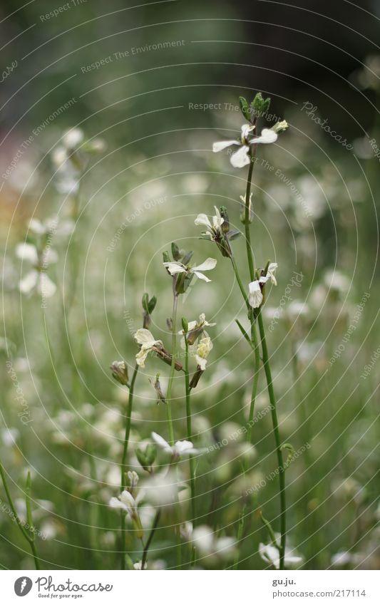 Nature Beautiful White Flower Green Plant Summer Black Meadow Autumn Blossom Grass Environment Bushes Stalk