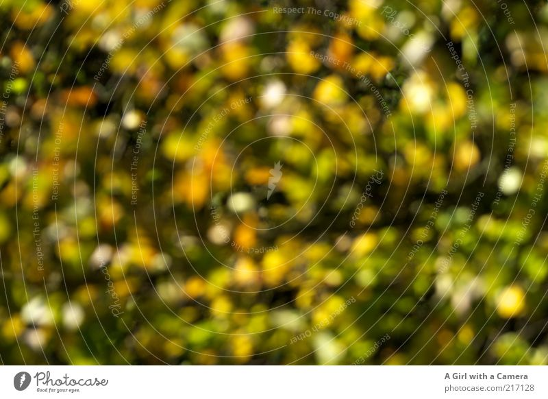 You're not drunk. Environment Nature Plant Autumn Tree Leaf Exceptional Uniqueness Natural Multicoloured Yellow Green Pattern Deserted Autumnal Colour photo