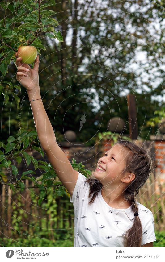 Nature Girl Environment Autumn Natural Happy Food Fruit Nutrition Agriculture Harvest Apple Forestry Pick Thanksgiving Fruit trees