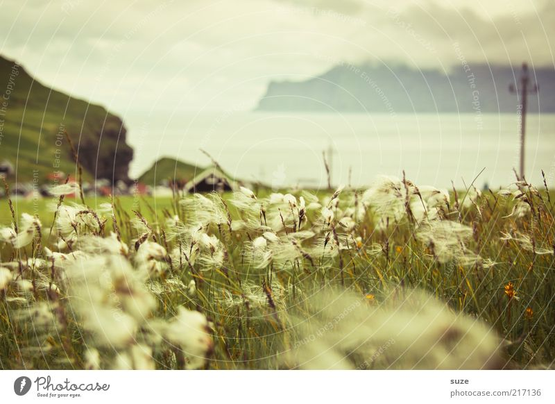 Nature Plant Clouds Loneliness Meadow Grass Mountain Landscape Coast Fog Wind Weather Environment Rock Island Climate