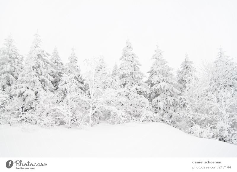 sinking snowline Winter Snow Climate Climate change Weather Ice Frost Forest Bright Cold White Black Forest Fir tree Monochrome Subdued colour Copy Space top