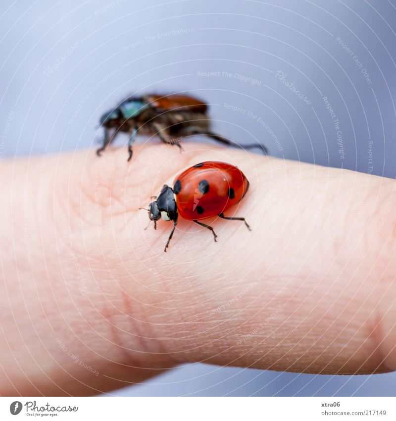Animal Fingers Insect Friendliness Human being Macro (Extreme close-up) Beetle Ladybird Crawl Hand Spotted Action Love of animals