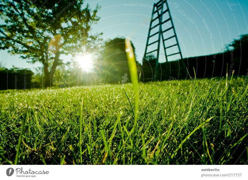Sky Nature Tree Landscape Environment Grass Garden Hope Lawn Dew Ladder Hedge Sunrise Emotions October Sunbeam