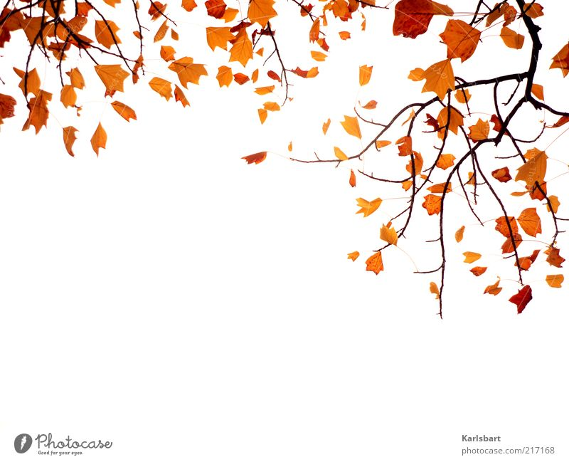 Nature Sky Plant Leaf Autumn Wood Lifestyle Change Transience Branch Abstract Autumn leaves Suspended Autumnal Autumnal colours