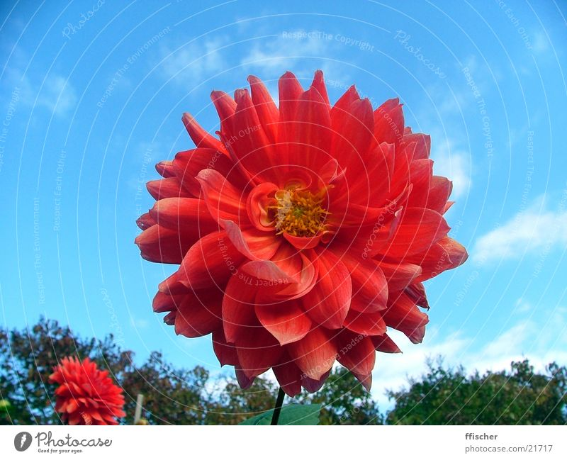 Sky Blue Red Flower Leaf Yellow Autumn Near October Curved Botanical gardens