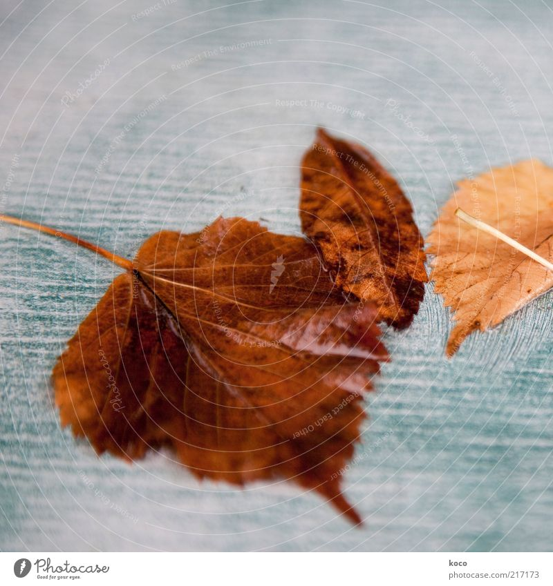 Peel off Water Autumn Leaf To fall Lie Faded Old Cold Wet Brown Yellow Gold Gray Green White End Decline Transience Subdued colour Macro (Extreme close-up)