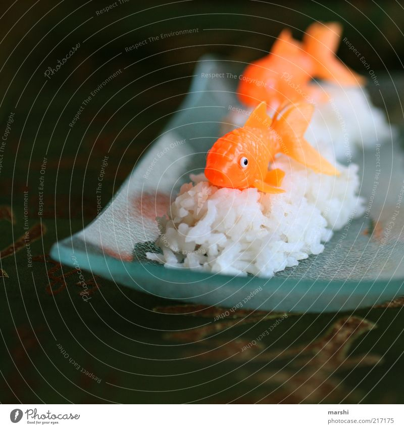 Sushi, something different Food Fish Nutrition Finger food Leisure and hobbies Animal 2 White Orange Plate Japan Life Rice Food photograph Glass Asia