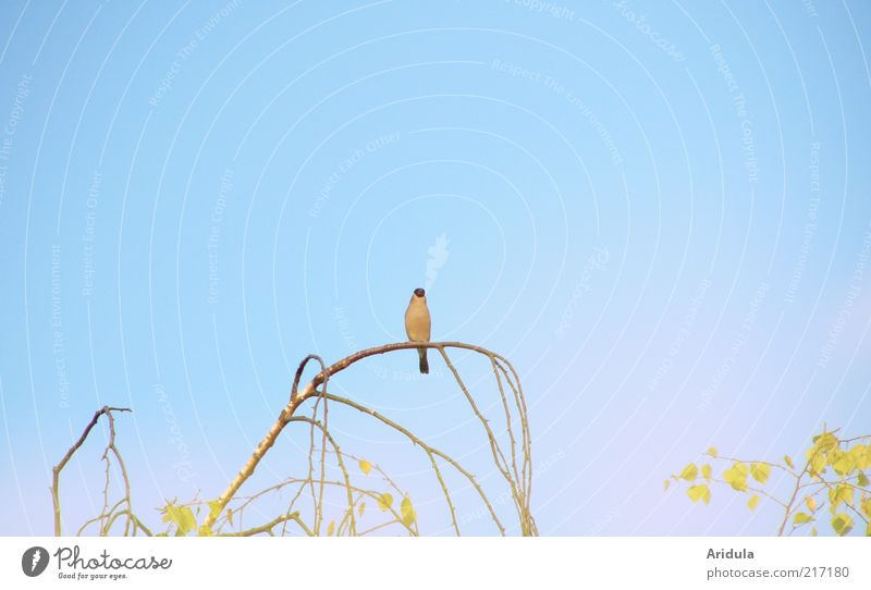 Nature Sky Tree Blue Plant Calm Animal Emotions Air Moody Bird Environment Sit Observe Branch Blue sky