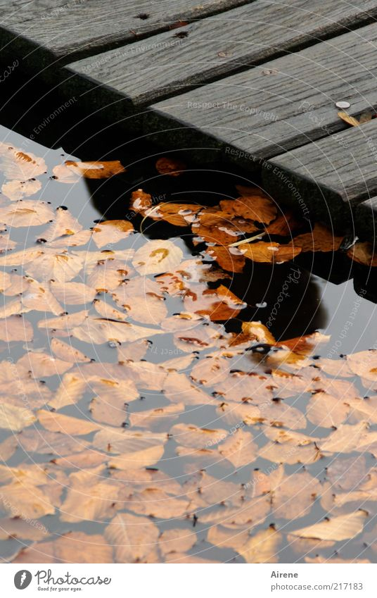 Summer - fallen into the water Water Autumn Weather Lake Footbridge Exceptional Threat Cold Sadness Grief Loneliness Fear Dangerous Leaf Dark Shadow Silhouette