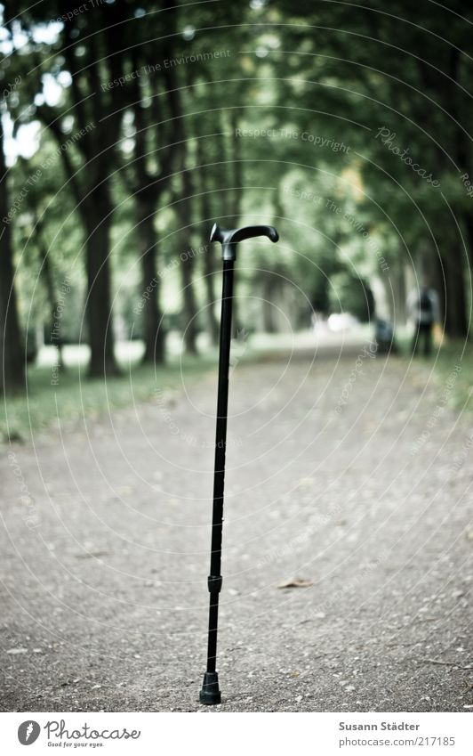 Tree Plant Park Exceptional Footpath Walking aid Lanes & trails Perspective Unwavering Stick Walking stick Disability friendly Hiking stick