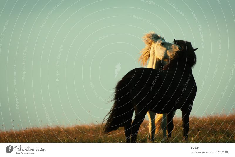 Little pleasure Environment Nature Animal Sky Cloudless sky Beautiful weather Meadow Farm animal Wild animal Horse 2 Pair of animals Sympathy Friendship