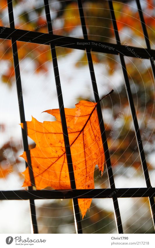 Nature Sky Plant Leaf Autumn Emotions Sadness Environment Gold Perspective Hope Safety Threat Protection Longing Fence