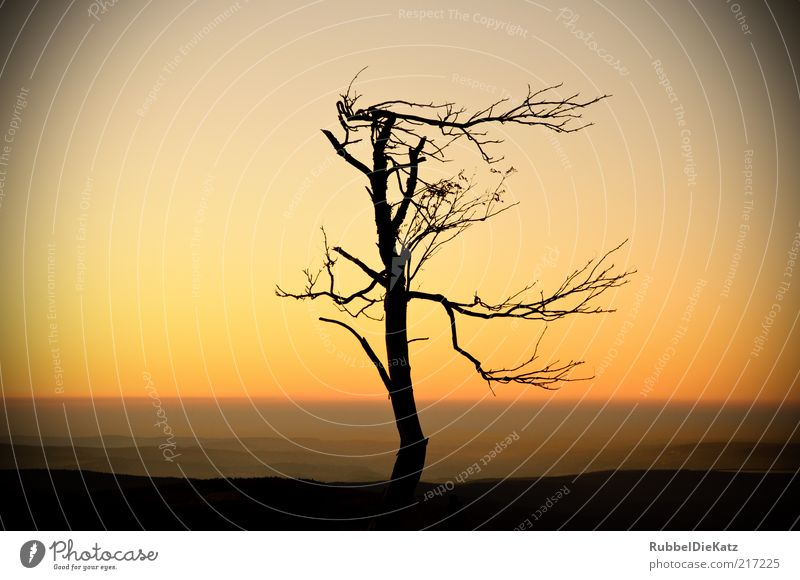 Nature Beautiful Old Sky Tree Plant Red Black Far-off places Yellow Autumn Death Mountain Landscape Environment Horizon