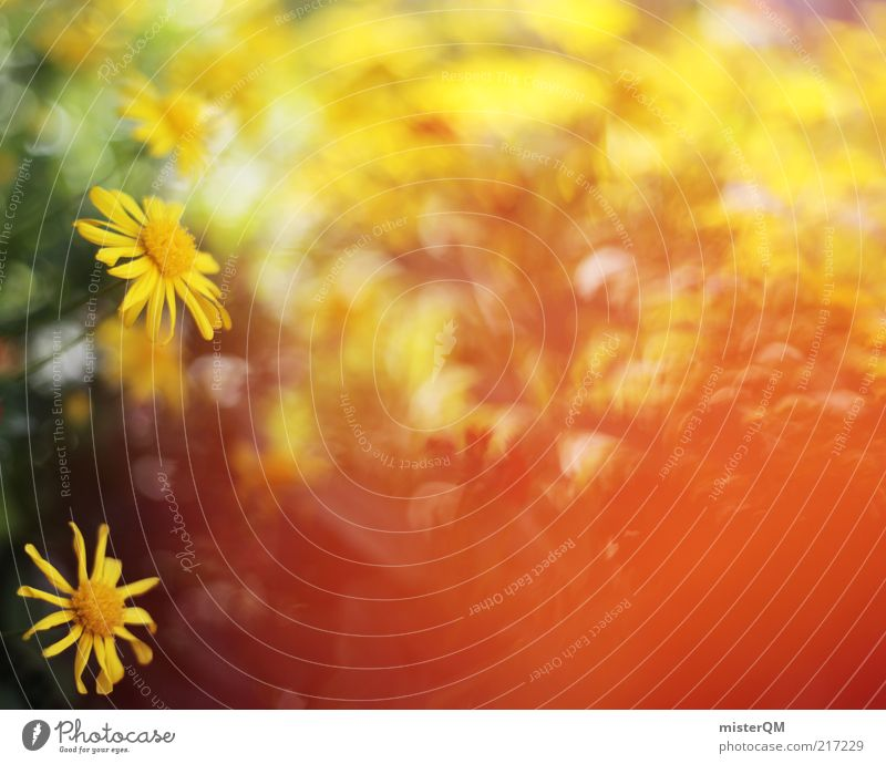 Nature Plant Summer Flower Red Landscape Environment Yellow Warmth Blossom Spring Contentment Esthetic Blossoming Retro Soft