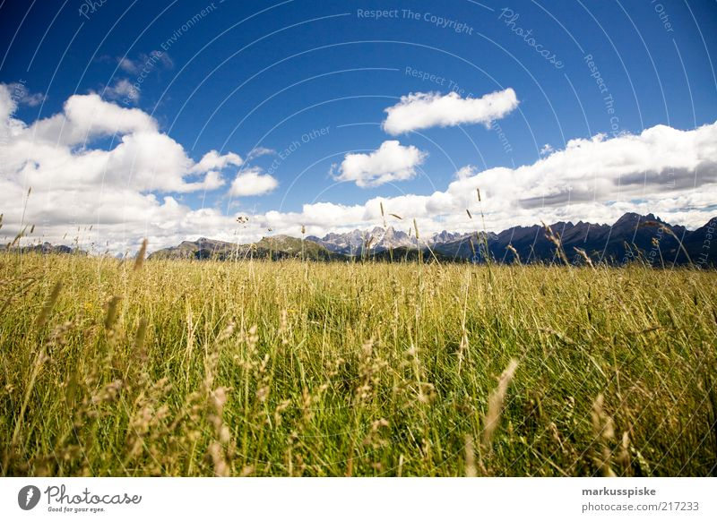 Plant Calm Loneliness Far-off places Relaxation Meadow Grass Mountain Freedom Landscape Fresh Alps Peak Fragrance Beautiful weather