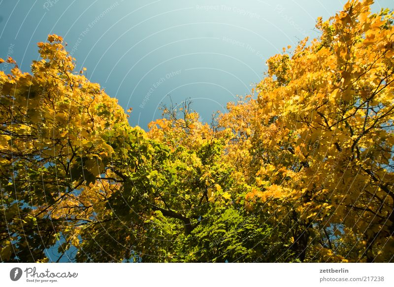 Weimar Environment Nature Landscape Plant Sky Autumn Climate Beautiful weather Tree Emotions Moody October Deciduous tree Autumn leaves Leaf Gold Colour photo