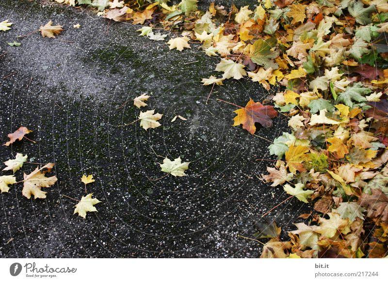 corner of leaves Environment Autumn Wind Leaf Street Lanes & trails Dirty Dark Under Yellow Gold Gray Decline Transience Change Asphalt Autumn leaves Autumnal