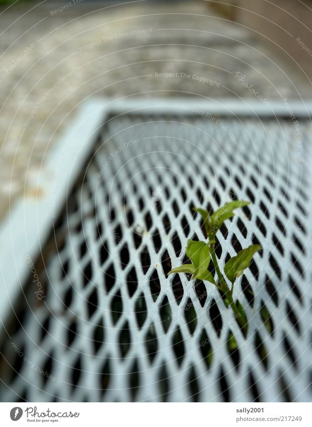 Nature Green Plant Leaf Life Wall (building) Above Wall (barrier) Metal Environment Concrete Hope Growth Stand Simple Uniqueness