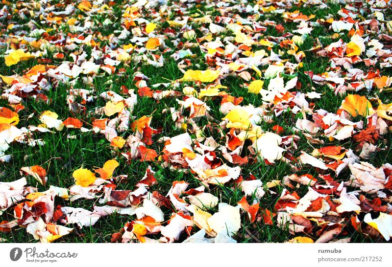 feuilles jaunes Nature Earth Autumn Beautiful weather Grass Leaf Meadow Multicoloured Yellow Green Calm Autumn leaves Lawn Seasons Colour photo Exterior shot