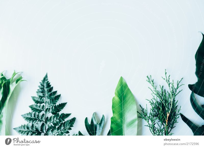 Creative layout made of green leaves Nature Plant Summer Colour Green White Tree Leaf Forest Natural Art Garden Fashion Above Bright Growth