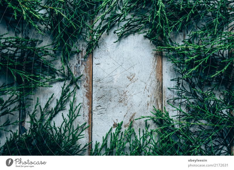 Creative layout made of green leaves. Flat lay. Nature concept Plant Summer Colour Green White Tree Leaf Forest Natural Art Garden Fashion Above Bright Growth