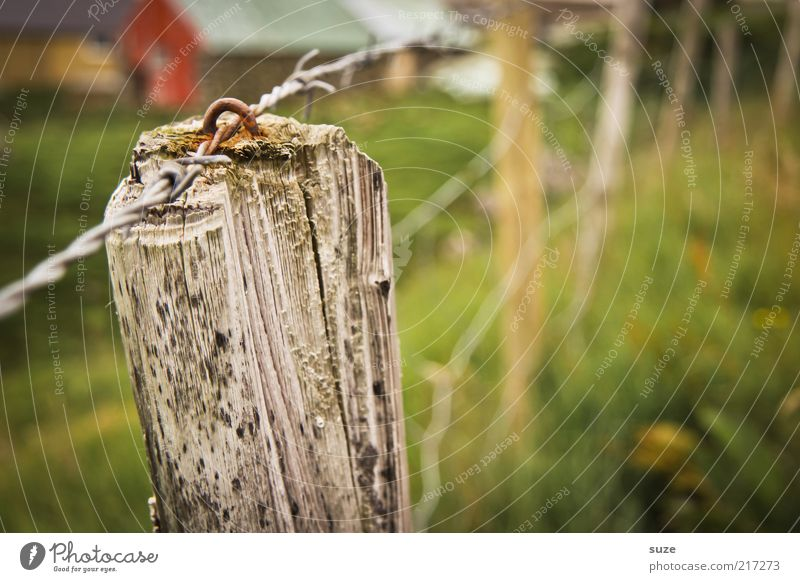full post Agriculture Forestry Nature Landscape Meadow Old Green Føroyar Fence Pole Border Pasture Wire fence Fence post Wood Grass Enclosure Country life Rust