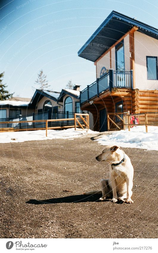 Dog Old Vacation & Travel Winter Animal House (Residential Structure) Far-off places Relaxation Snow Freedom Dream Contentment Flat (apartment) Facade Wait