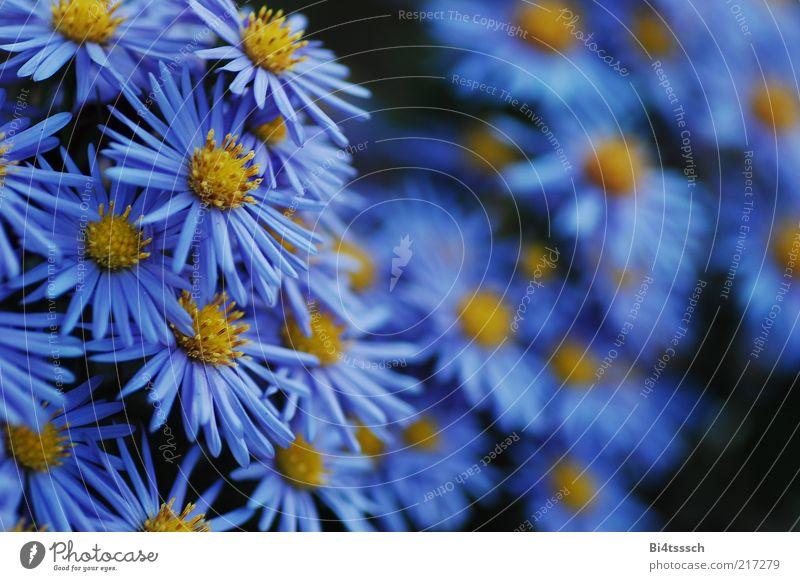 Nature Beautiful Flower Blue Plant Black Yellow Blossom Power Environment Esthetic Emotions