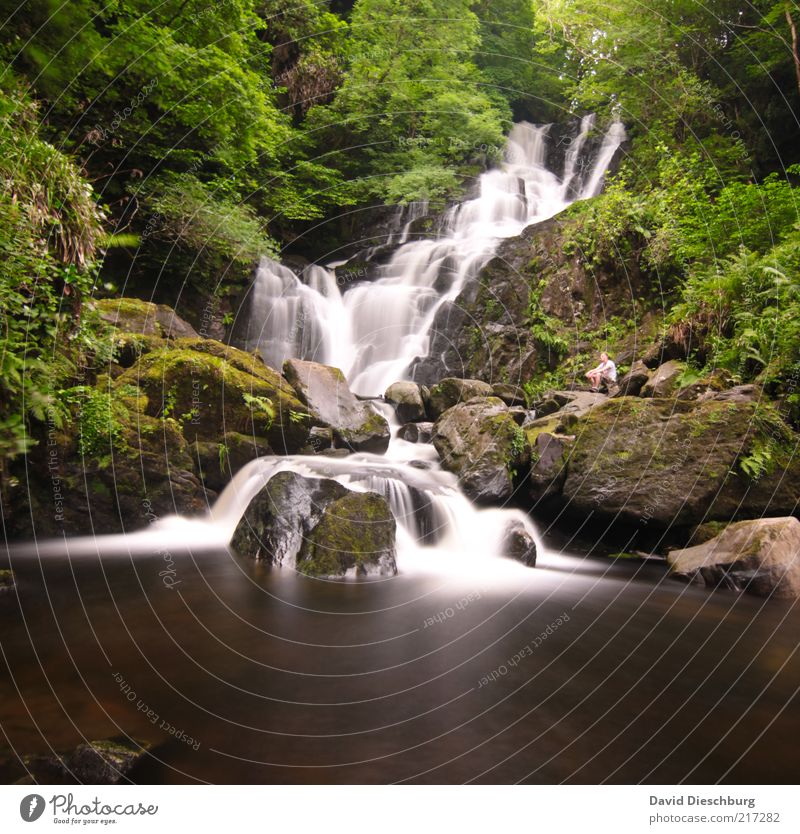 pure nature Nature Landscape Plant Water Spring Summer Tree Moss Foliage plant Forest Rock River bank Brook Waterfall Brown Green White Ireland Long exposure
