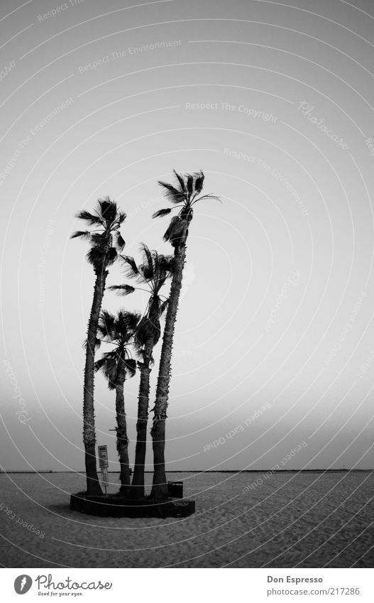 beach party Beach Ocean Palm tree Loneliness Calm Black & white photo Far-off places Copy Space top Copy Space right Deserted