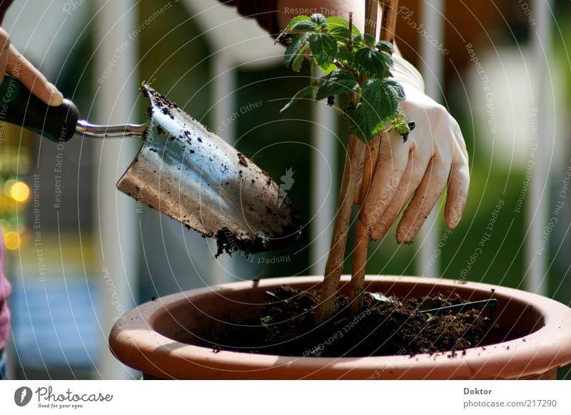 grünes händchen Hand Green Plant Flower Spring Natural Fingers Responsibility Human being