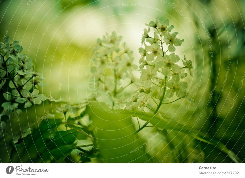 In the Shadows Nature White Flower Green Plant Dark Autumn Emotions Moody Environment Large Esthetic Authentic Exceptional Fragrance