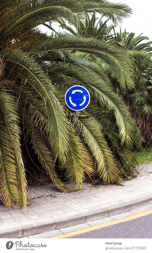 Traffic sign, roundabout in the middle of palm leaves Plant Leaf Foliage plant Exotic Palm tree Transport Traffic infrastructure Road sign Traffic circle Sign