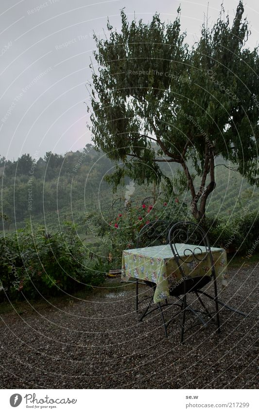 Breakfast in the rain (Tuscany [3]) Rain Tree Vineyard Terrace Table Chair Vacation & Travel Moody Romance Calm Wanderlust Loneliness Colour photo Exterior shot