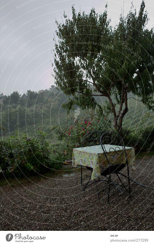 Tree Vacation & Travel Calm Loneliness Rain Landscape Moody Table Romance Vantage point Chair Terrace Wanderlust Tuscany Vineyard