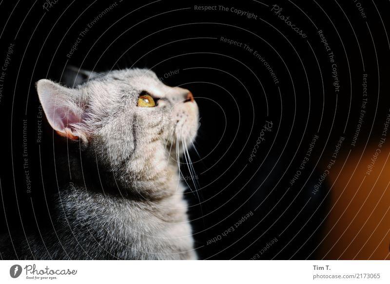 Cat Animal Contentment Pet