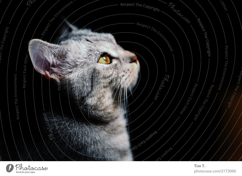 cat Animal Pet Cat Animal face 1 Baby animal Colour photo Interior shot Deserted Evening Central perspective Upward