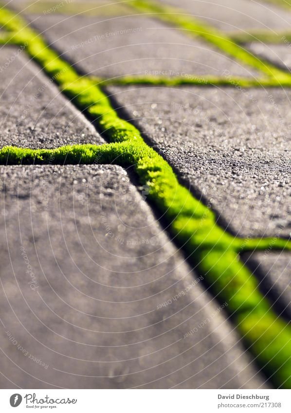 Green Network Nature Summer Moss Foliage plant Lanes & trails Sidewalk Structures and shapes Connection Portrait format Line Stone Paving stone Diagonal Bright