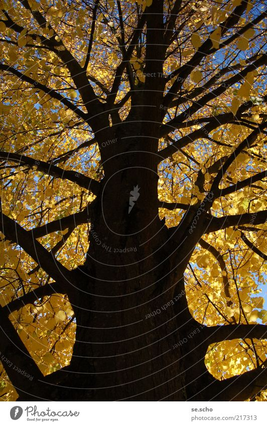 autumn tree Nature Plant Sky Autumn Tree Forest Colour Transience Colour photo Exterior shot Deserted Evening Shadow Central perspective Growth Branch