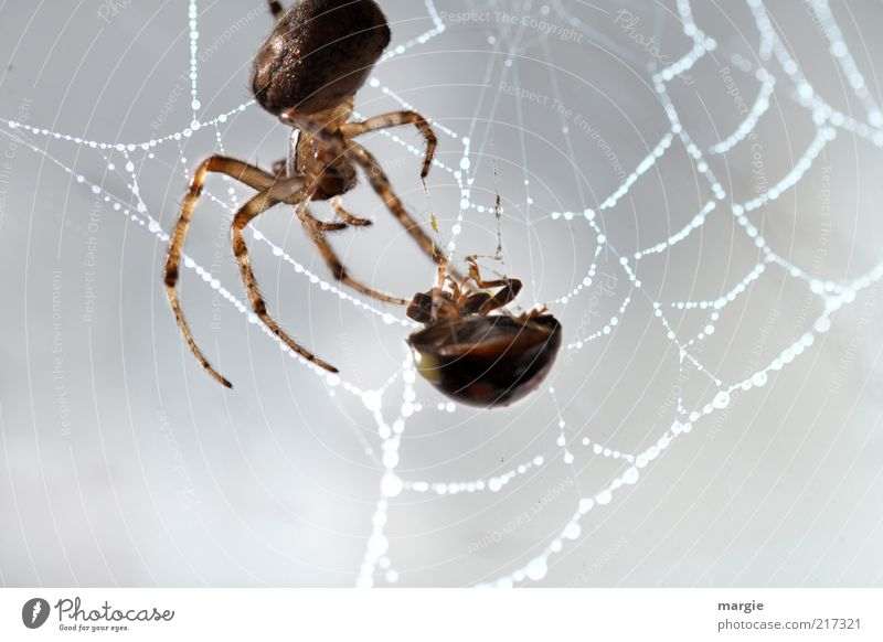 Meal! Nature Animal Beetle Spider Network Spider's web Nutrition Captured Catch To hold on To feed Crawl Aggression Creepy Strong Power Might Death Fear