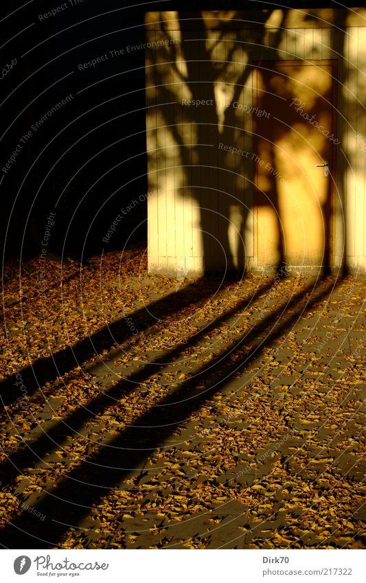 Tree Leaf Black Yellow Autumn Gray Brown Door Threat Mysterious Hut Seasons Shadow Dusk Strange