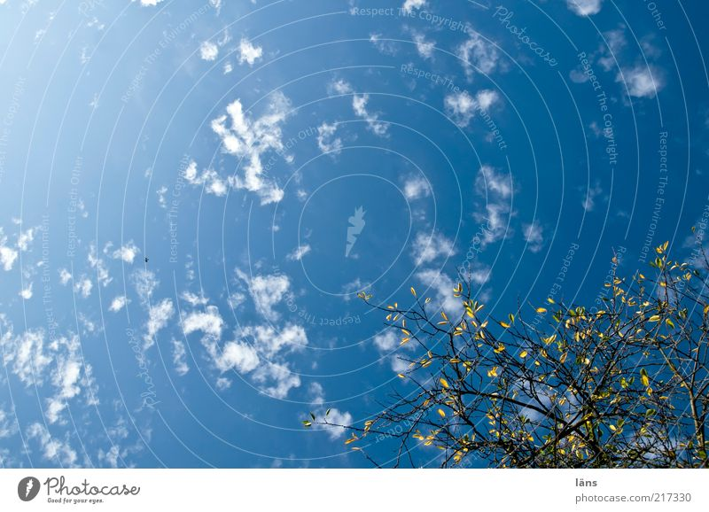 Nature Sky Blue Plant Calm Leaf Clouds Autumn Environment Esthetic Change Branch Goodbye Beautiful weather
