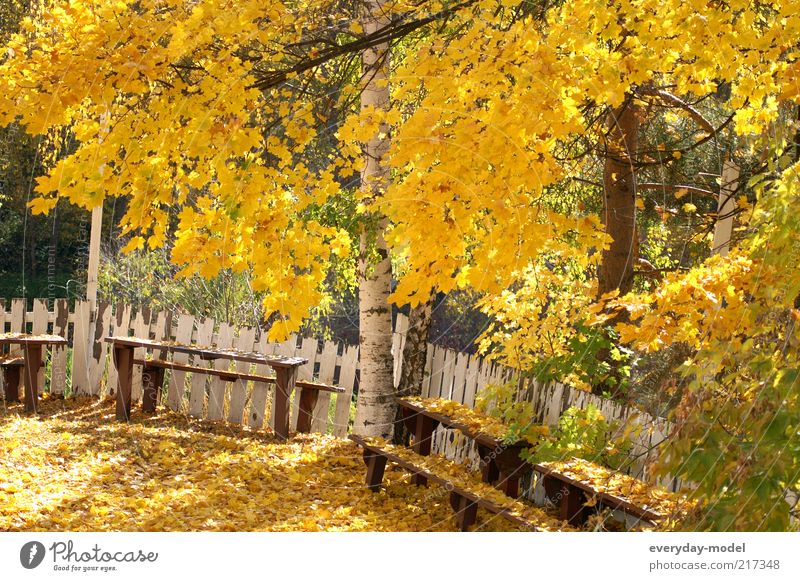 The summer goes Sunlight Autumn Beautiful weather Tree Leaf Park Forest Relaxation Yellow Gold Green Emotions Moody Contentment Optimism Hope Life Nostalgia