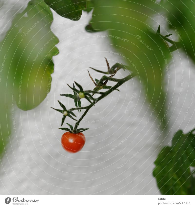 Nature White Green Plant Red Leaf Blossom Healthy Food Esthetic Growth Bushes Stalk Vegetable Delicious Hang