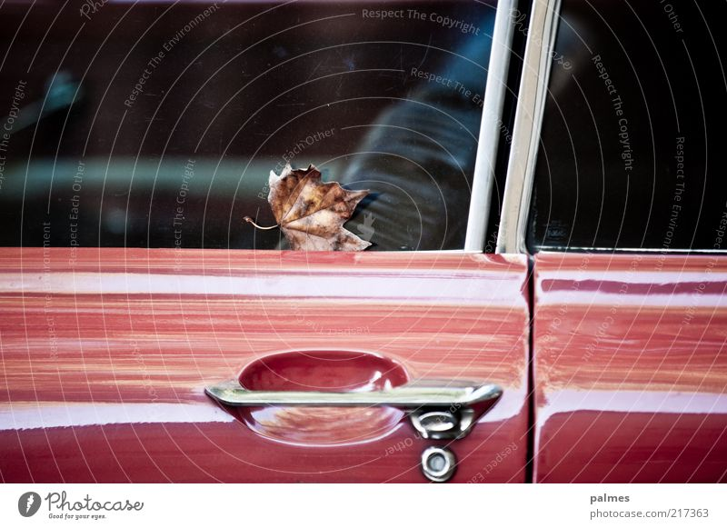 Red Calm Leaf Car Glittering Stand Car door Mobility Parking Car Window Vintage car Motor vehicle Partially visible Section of image Means of transport