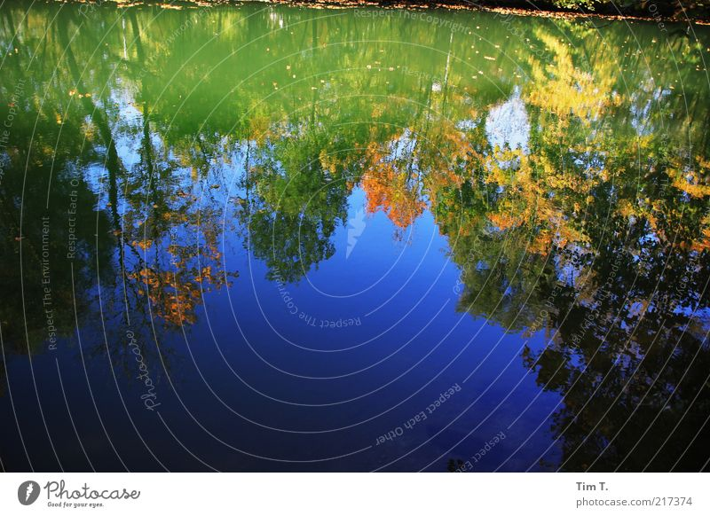 Autumn at the river Environment Nature Landscape Plant Tree River bank Water Climate Colour photo Multicoloured Exterior shot Deserted Day Light Shadow Contrast