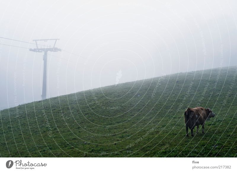 Animal Dark Cold Meadow Autumn Field Fog Weather Stand Hill Cow Pasture Bad weather Ski lift Nature Cable car